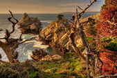 Cypress Point in late afternoon — Stock Photo
