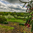 Closeup of Pine Tree with Apple Trees in Background — Stock Photo #51036643