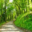 Road through the woods in Trento, Italy — Stock Photo