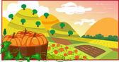 Pumpkin Field — Stock Vector
