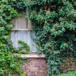 Old Window Covered in Ivy — Stock Photo