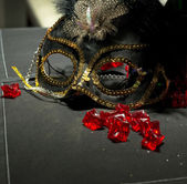 Sequin Masquerade Mask — Stock Photo