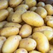 Foto de Stock  : Basket of Pototoes (2)