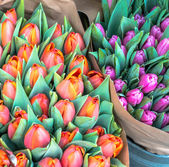 Bunches of Tulips — Stock Photo