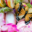 Candy Butterfly (2) — Stock Photo