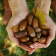 Brown Acorns in the hands with leaf autumn — Stock Photo