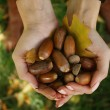 Brown Acorns in the hands with leaf autumn — Stock Photo #34865835