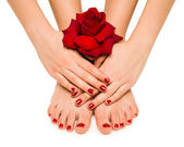 Beautiful manicure and pedicure with a rose — Stock Photo