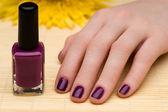 Beautiful manicures and Chrysanthemum — Stock Photo