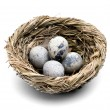 Quail egg in the nest - Stock Photo
