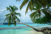 Tropical beach with palm — Stock Photo