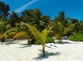 Tropisch strand met palm — Stockfoto