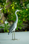 Heron posing on the beach — Stock Photo