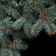 Christmas tree isolated on the black background — Stock Photo