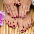 Pedicure and manicure in the salon spa, hand and feet care — Stock Photo #50231525