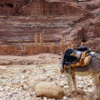 Royalty-Free Stock Photo: Donkey in Petra.