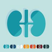 Flat design: kidneys — Stock Vector