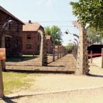 Auschwitz — Stock Photo #22174863
