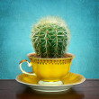 Cactus in cup — Stock Photo
