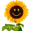 Smiling sunflower — Stock Photo