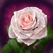 "Beautiful pink rose with words ""I love you"" in all languages of — Zdjęcie stockowe"