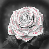 "Beautiful rose with words ""I love you"" in all languages of the w — Stockfoto"