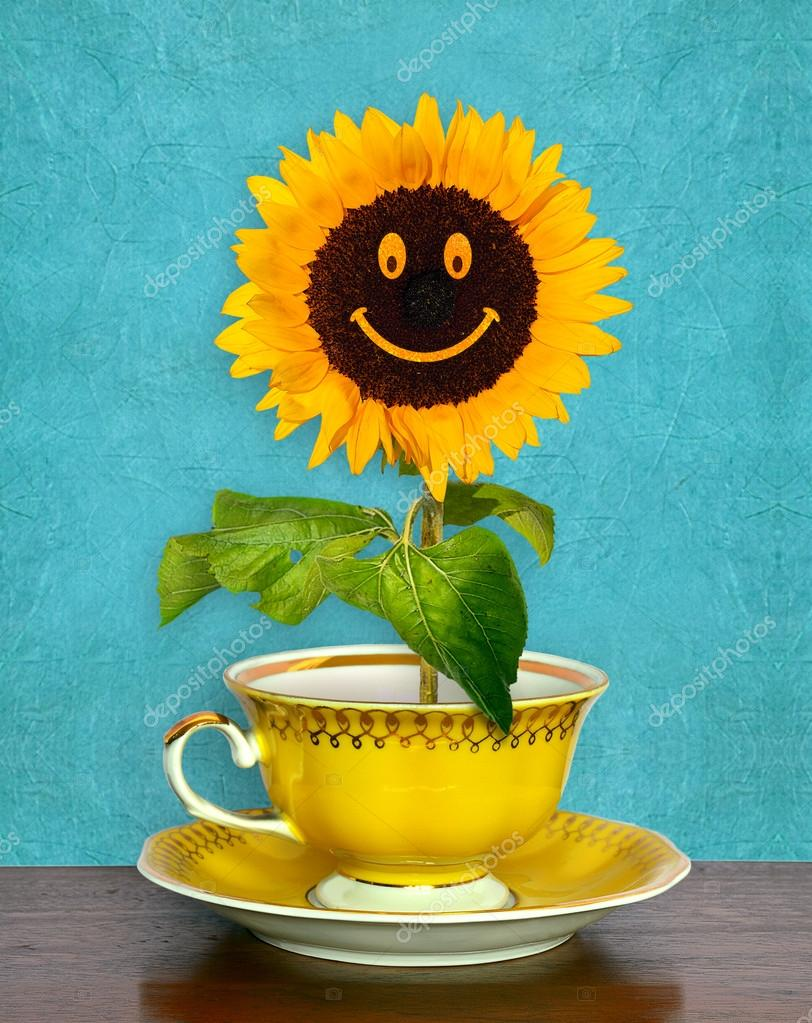 Smiling Sunflower Images Smiling Sunflower in a Cup on