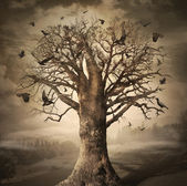 Magic Tree with Crows — Stock Photo