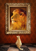 Cat looking at a portrait of a lion in a golden frame. — Stock Photo