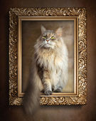The sitting cat in gold frame — Stock Photo