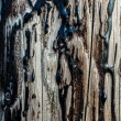 Stock Photo: Wood and Tar Texture