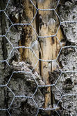 Tree bark protected with chicken wire — Stock Photo