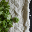 Stock Photo: Cilantro on cotton
