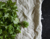 Cilantro on cotton — Stock Photo