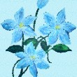 The  picture an author a  blue clematis — Stockfoto