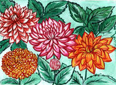 The picture an author multicolored dahlias — Stock Photo