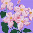 The  picture an author a pink clematis — Stockfoto