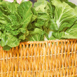 Leafy Green Spinach For Retail — Stock Photo