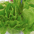 Stock Photo: Fresh Spinach For Sale