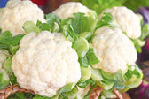 Fresh And Cauliflowers For Sale In the Market — Stock Photo