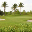 Stock Photo: Golf Course With Palm Trees And Bunkers
