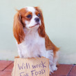Dog With a Cardboard Sign — Stock fotografie