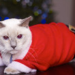 Cute Cat In Santa's Costume — Stock Photo #30730531