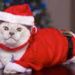 Cat In SantClaus Costume — Stock Photo #30730533