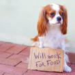 Cute Dog With a Cardboard Sign — Stock Photo