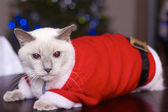 Cute Cat In Santa's Costume — Stock Photo