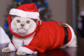 Cat In Santa Claus Costume — Stock Photo