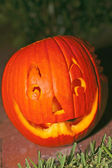 Freshly Carved Pumpkin Jack-o-lantern — Stock Photo