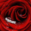 rosa roja con diamante anillo closeup — Foto de Stock