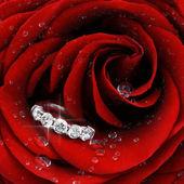 Red rose with diamond ring closeup — Stock Photo